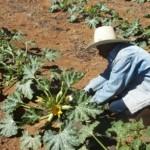 Plano Safra Agricultura Familiar vai ajudar os pequenos agricultores nordestinos