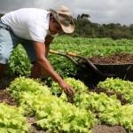 Agricultura familiar expande produção agrícola