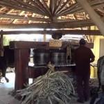 Engenho de açúcar oferece história e gastronomia para todos