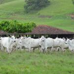 Fazenda Recanto, o celeiro do Nordeste