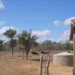 Liberação de recursos  do Agroamigo ajuda pequeno produtor rural