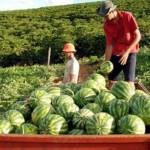 Produção agrícola cresce com mais financiamento