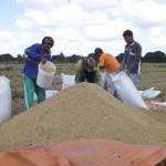 Agricultores vão poder investir outra vez no plantio e colher boa safra