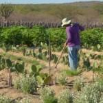 Produtores rurais tiveram dívida regularizada no Banco do Nordeste
