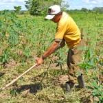 Pequenos agricultores também estão sendo contemplados com regularização