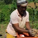 Agricultores nordestinos poderão renegociar débito em atraso com o Banco do Nordeste