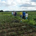 Agricultores do povoado de Poço Comprido, em Limoeiro de Anadia, recebem assistência técnica e elevam produção no campo