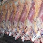 Melhora no processo de abate de carne conquista mercado e satisfaz consumidor