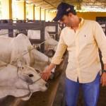 Criador Celso Pontes de Miranda Filho oferecerá ao mercado animais com alta genética