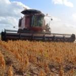 Cultivo da soja vem crescendo a cada ano em Alagoas