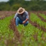 Regularização de débitos estimula produtores rurais a fazerem novos plantios