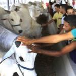 Parque da Pecuária terá animais de alta genética e deverá receber inúmeros visitantes