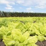 PAA/AL vai beneficiar 1.875 agricultores em 78 municípios com a compra direta de alimentos da agricultura familiar
