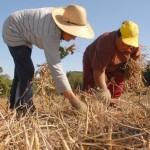 Agricultores e trabalhadores terão mais dificuldades para obter a aposentadoria com a reforma da Previdênica