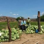 Banco do Nordeste tem ajudado a melhorar a vida dos pequenos produtores rurais