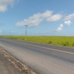 Obras de duplicação Maceió-Arapiraca avançam