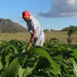 Embrapa Alagoas vai ajudar produtores alagoanos