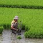 Mais incentivos às famílias  de produtores rurais do Baixo São Francisco
