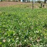 Distribuição de sementes garante boa safra no Estado