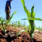 Produtores rurais está recebendo o perdão de dívidas