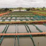 Setor da piscicultura deixou de faturar por falta de transporte