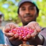 Sementes foram distribuídas para os produtores rurais