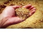 Cadeia produtiva do arroz em debate