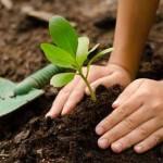 Plantio de muda de árvore