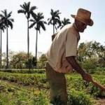 Menos recursos para os pequenos agricultores