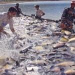Cadeia da piscicultura sofre impacto negativo com decisão de suspensão de venda para redes de supermercados