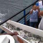 Codevasf insere espécies de peixes no rio São Francisco