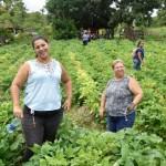 Agricultoras familiares investem na produção de alimentos e livres de agrotóxico