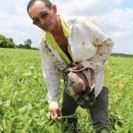 Seu Ariston mostra cultivo de feijão com kits de irrigação da Codevasf