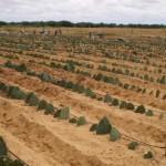 BNB tem buscado incentivar o agricultor da região do semiárido