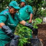 Ação do Mês da Mulher na Praça da Faculdade contará com educação ambiental e doação de mudas