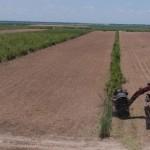 Produção alagoana de cana-de-açúcar vai aumentar nesta safra 2019/2020