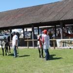 Exposição apresentará os melhores animais das raças gir e girolando