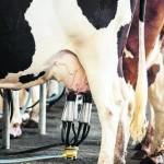 Produtores de leite ganharão incentivos