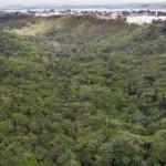 Parque Municipal de Maceió pssui 84 hectares