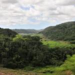Estado de Alagoas aparece na relação como o maior defensor da Mata Atlântica