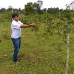 Diversificação da fruticultura surge como mais opção de incremento de renda do pequeno produtor