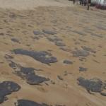Em Alagoas, o material já foi encontrado em 13 praias de nove municípios