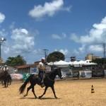 Provas mostram a força, a rapidez e o adestramento dos cavalos