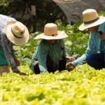 Agropecuária puxou para cima a variação do Produto Interno Bruto