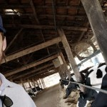 Médico veterinário Guilherme Sousa Guimarães diz que no período de secagem, a alta produção de leite e as dores podem gerar estresse nas vacas