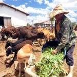 Produtor rural pode ir até a agência bancária e regularizar o pagamento