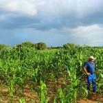 Banco do Nordeste ajudando a alavancar a agricultura regional