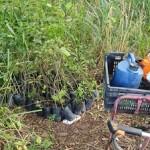 500 mudas foram plantadas pelo IMA, em colaboração com a prefeitura, na última quarta-feira