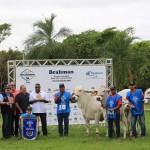 Casa Branca mostra mais uma vez que é destaque na criação do gado da raça Brahma