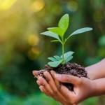 Campanha de Meio Ambiente apoiada pelo Banco do Nordeste prevê a sustentabilidade dos negócios
